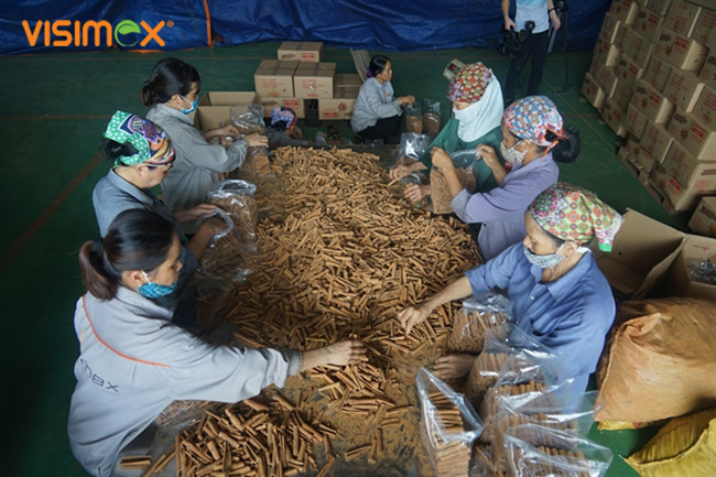 Cinnamon: the spice of life for farmers