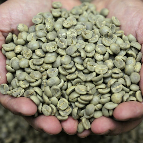 Vietnam reports higher coffee exports to the EU, as free trade agreement comes into force